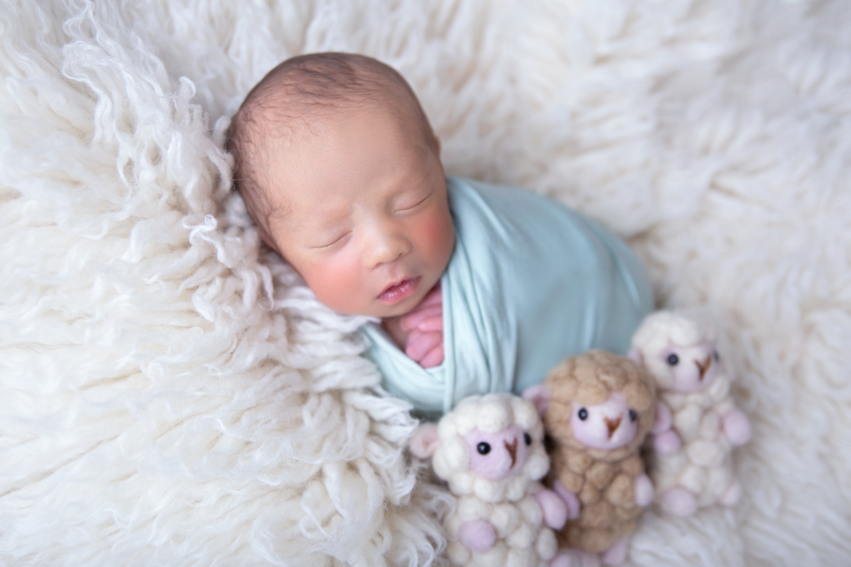 contando carneirinha Newborn Gêmeo ensaio em Brasilia DF