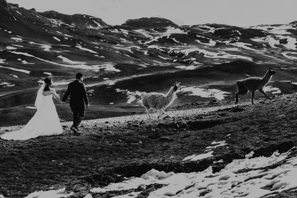 fotografía en blanco y negro de aventura en cochabamba cerro tunari con llamas