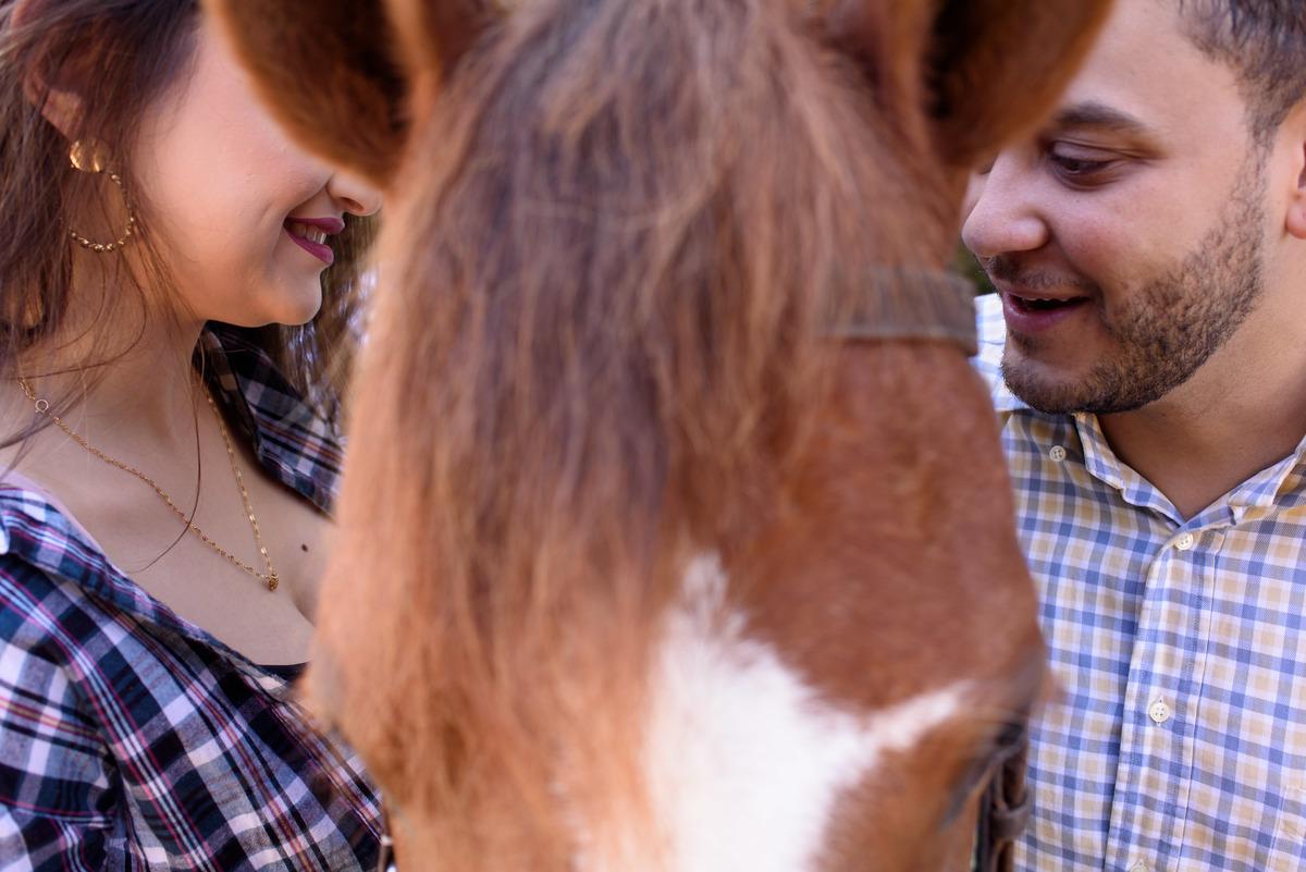 noivos cavalos
