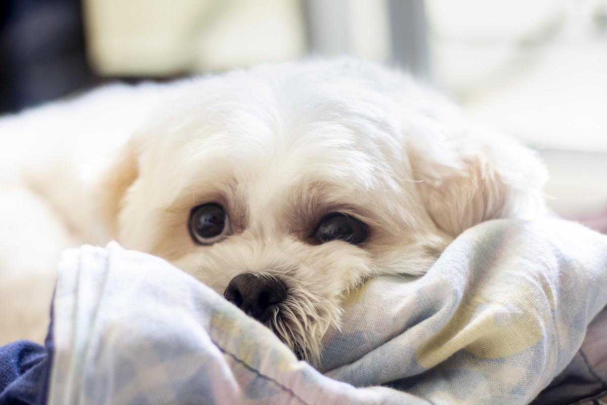 Ensaio gestante com cachorro, ensaio lifestyle